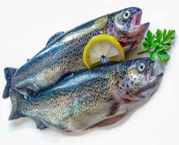 frischer-fisch-2-webseite